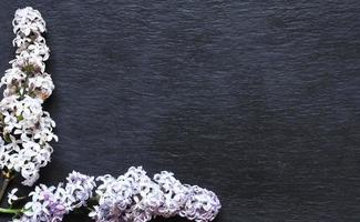 lila bloemen op leisteen achtergrond foto