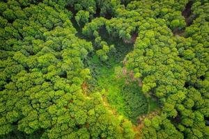 luchtfoto van een groen bos