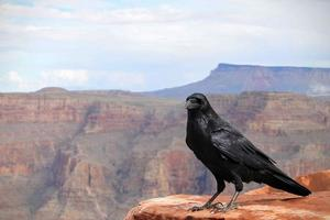 kraai bovenop de Grand Canyon