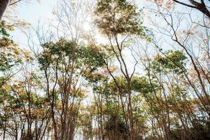 bomen in de zomer foto