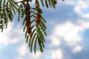 naaldboomtakjes met bladeren en vruchten