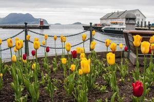 foto genomen in alasum, noorwegen
