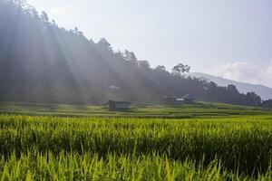terras rijstvelden foto