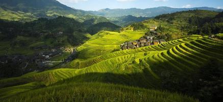 rijstveld in longsheng