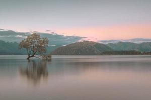 groene boom op de oever van het meer overdag