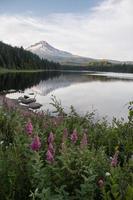paarse bloemen in Oregon foto