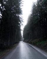 lege weg omgeven door bomen