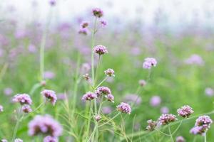bloemenveld in de zomer