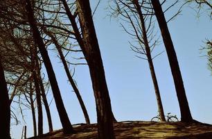 fiets overdag geparkeerd in de buurt van hoge bomen
