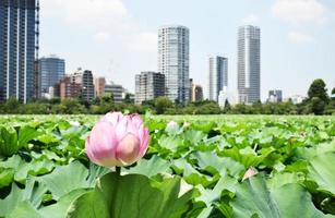 roze bloem met stad achtergrond foto