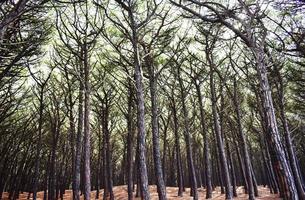 landschapsfoto van bomen