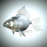 glazige vis met schubben en vinnen foto