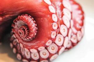 verse octopus deel 1 van 3 foto
