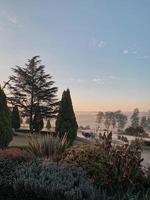 pijnbomen in een tuin bij een mistig weiland