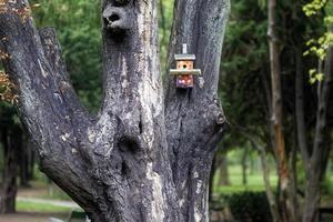 klein vogelhuisje in een boom