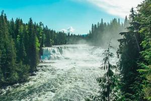 groene pijnbomen bij een waterval