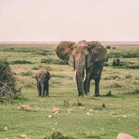 moeder en babyolifant foto