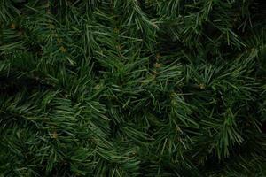 close-up van pijnboom