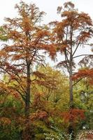 bomen met roestkleurige bladeren in de herfst