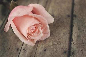 roze roos op rustiek hout