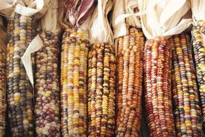 close-up van gedroogde maïs