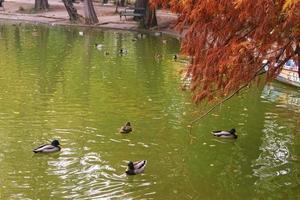 herfstlandschap met meer, vogels en bomen