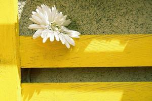 witte bloem op gele houten plank