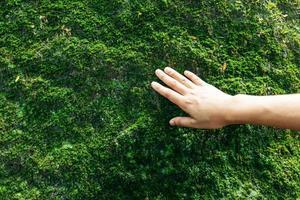 hand aanraken van mos op een rots