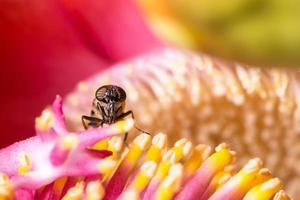 insect op een kleurrijke bloem