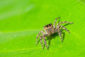 bruine spin op een groen blad
