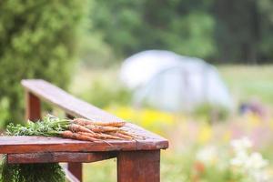bos van geplukte wortelen in de tuin