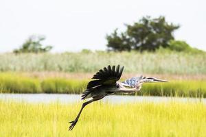 watervogels vliegen