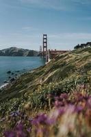 wilde bloemen bij de golden gate bridge