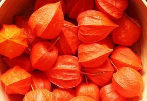 sinaasappelboomnoten foto