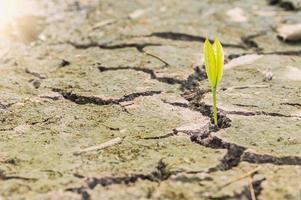 plant in de droge grond