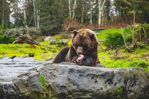 Woodland Park Zoo, Seattle, 2020 - bruine beren voeren