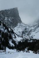 pijnbomen in de sneeuw