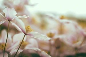 witte bloemblaadjes