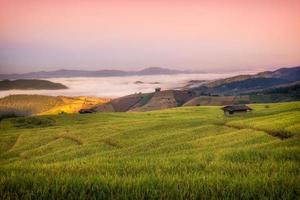 terrasvormig rijstveld
