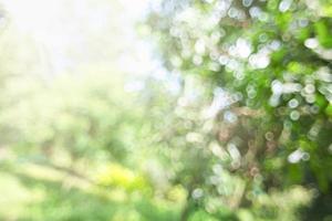 wazig natuurlijke bokeh achtergrond foto