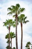 palmbomen voor blauwe hemel