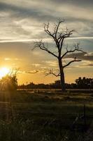 kale boom bij zonsondergang