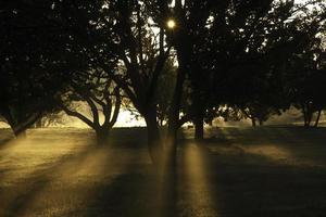 herfst ochtendster, het morton arboretum lisle il usa