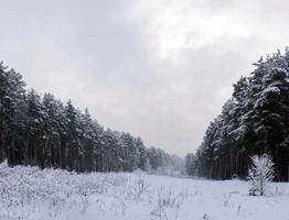 sneeuw die bomen en grond bedekt foto