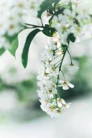 close-up van witte bloemen foto