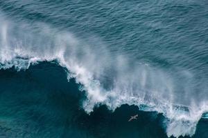 een vogel en beukende blauwe golven