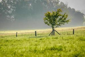 boom groeit in de buurt van een hek