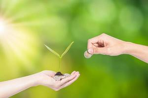 hand groeiend zaad van munten foto
