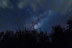 silhouet van bomen tegen de nachtelijke hemel