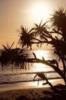silhouet van bomen bij zonsondergang foto